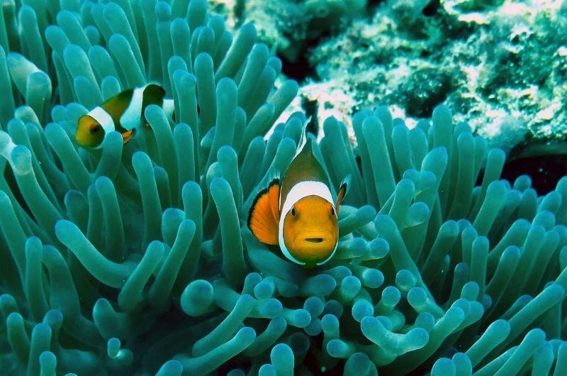 clownfisch-meeresschutz-sonnencreme-korallen-ray-aucott-a6iEo5bdVUU-unsplash