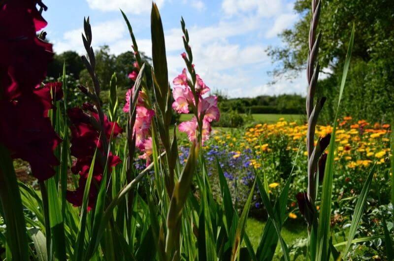 Heath-Farm-Cottages-Urlaub-Cotswolds-England-UK-Familienurlaub-mit-Kindern-nachhaltig-eco-tourism-Blumen